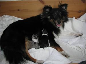 Den lille familie